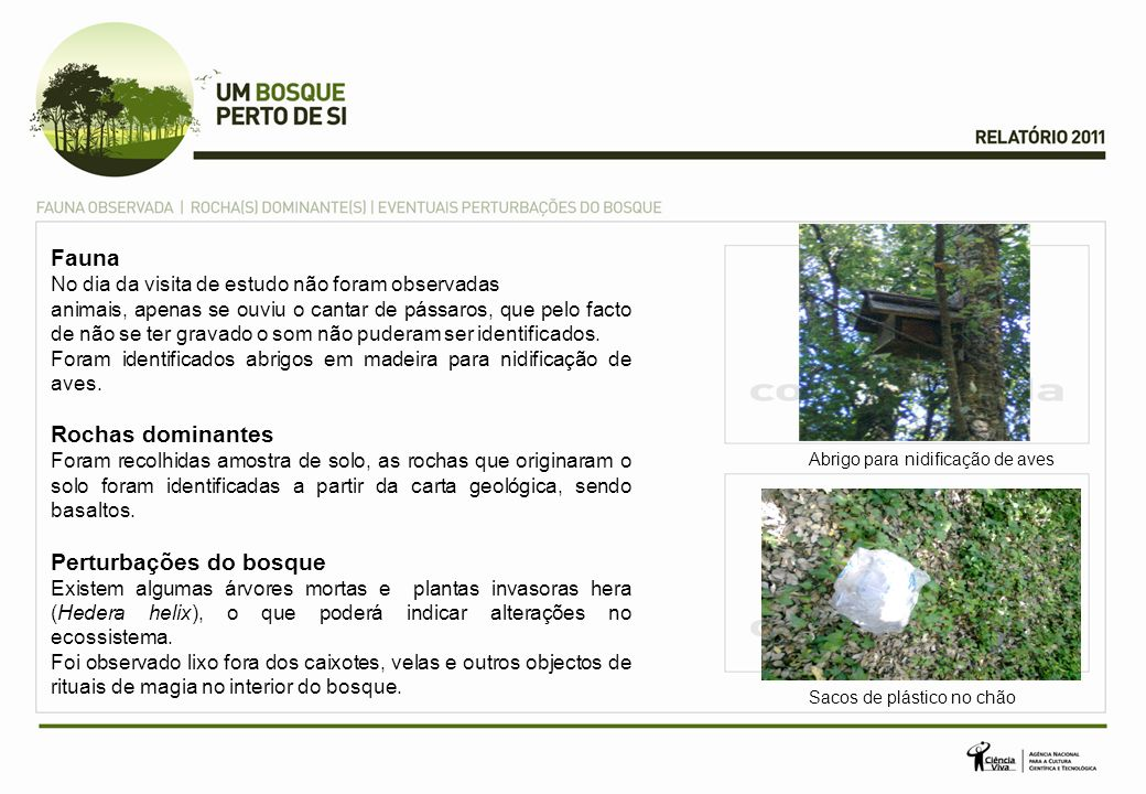 Perturbações do bosque