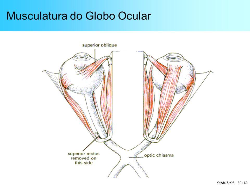 Musculatura do Globo Ocular