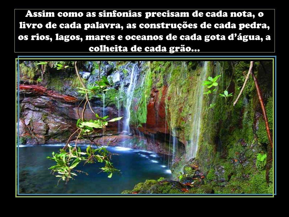 Assim como as sinfonias precisam de cada nota, o livro de cada palavra, as construções de cada pedra, os rios, lagos, mares e oceanos de cada gota d'água, a colheita de cada grão...