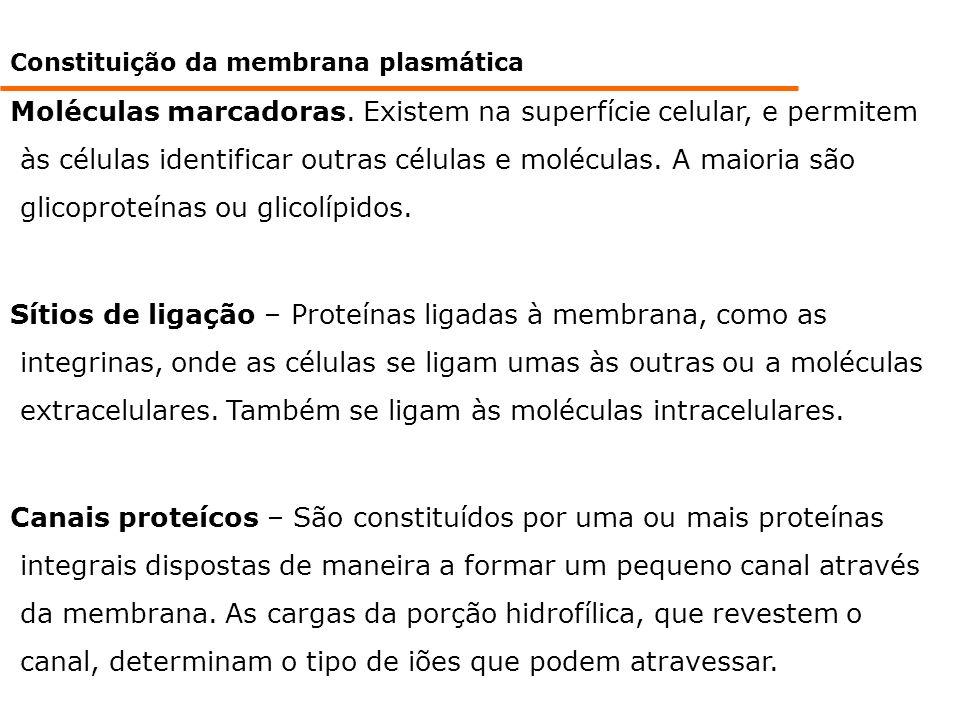 Constituição da membrana plasmática