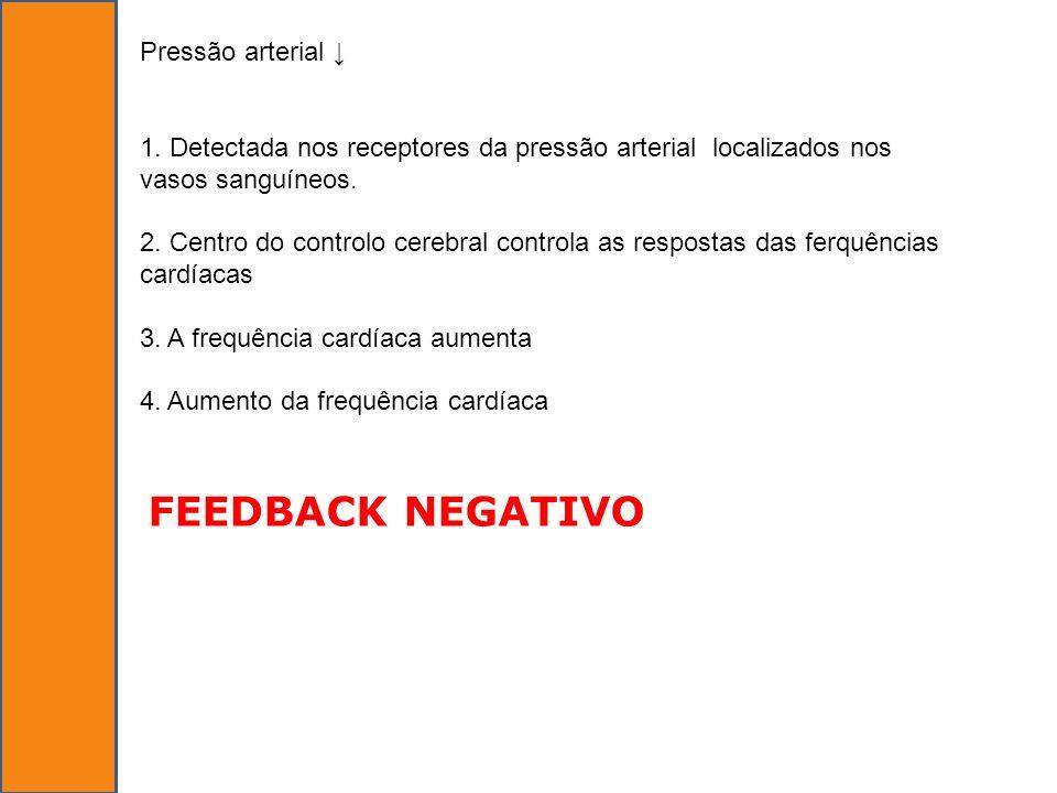 FEEDBACK NEGATIVO Pressão arterial ↓