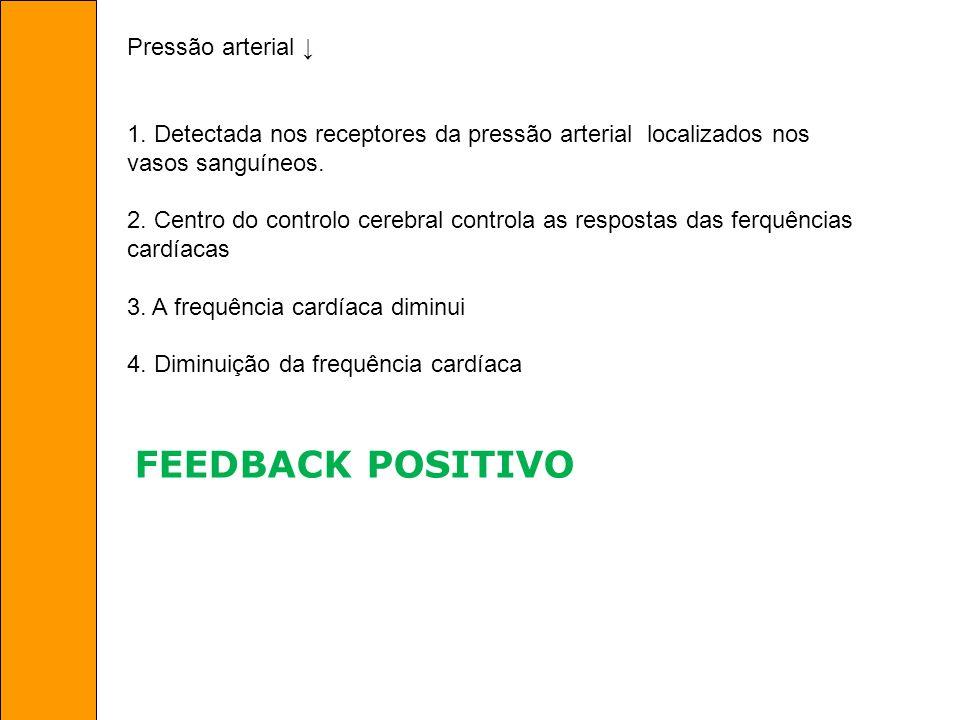 FEEDBACK POSITIVO Pressão arterial ↓