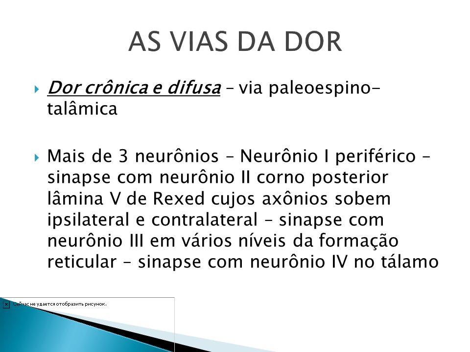 AS VIAS DA DOR Dor crônica e difusa – via paleoespino- talâmica