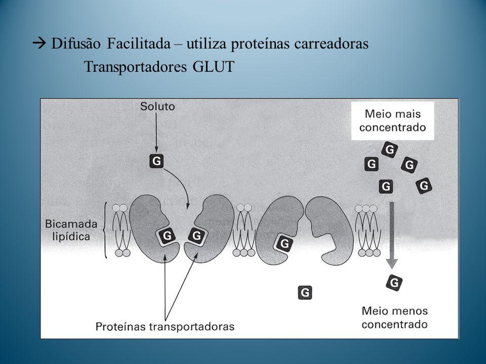  Difusão Facilitada – utiliza proteínas carreadoras Transportadores GLUT