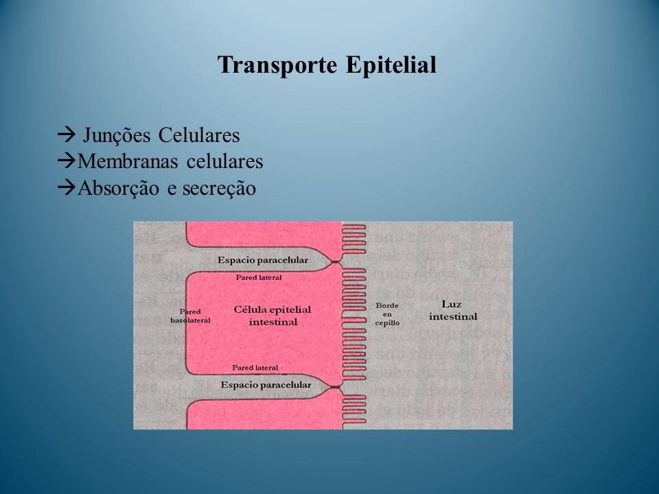 Transporte Epitelial  Junções Celulares Membranas celulares