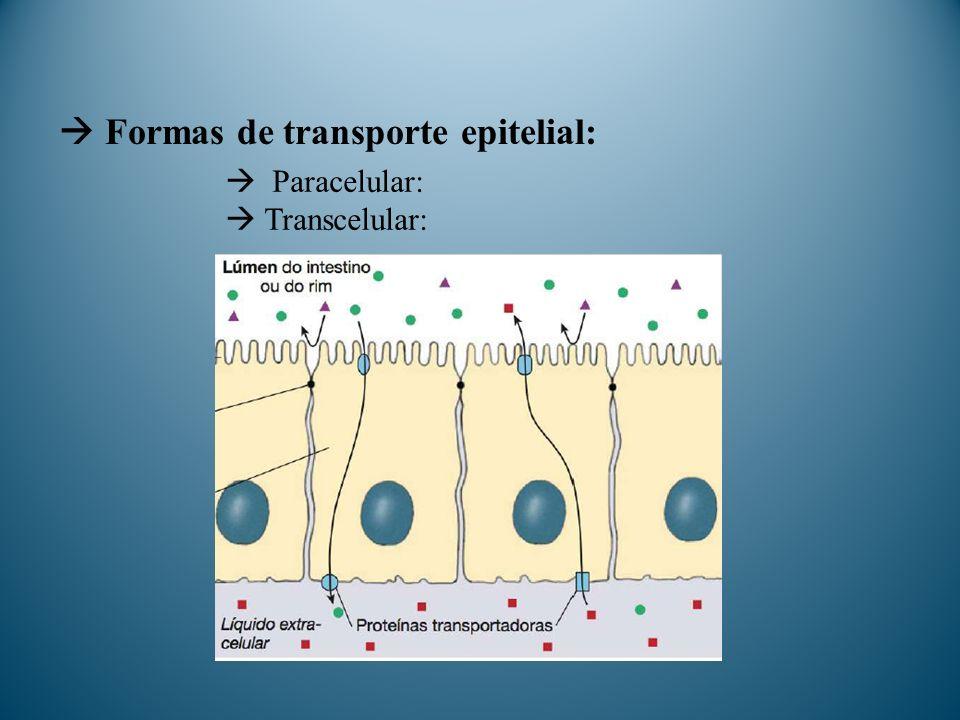  Formas de transporte epitelial: