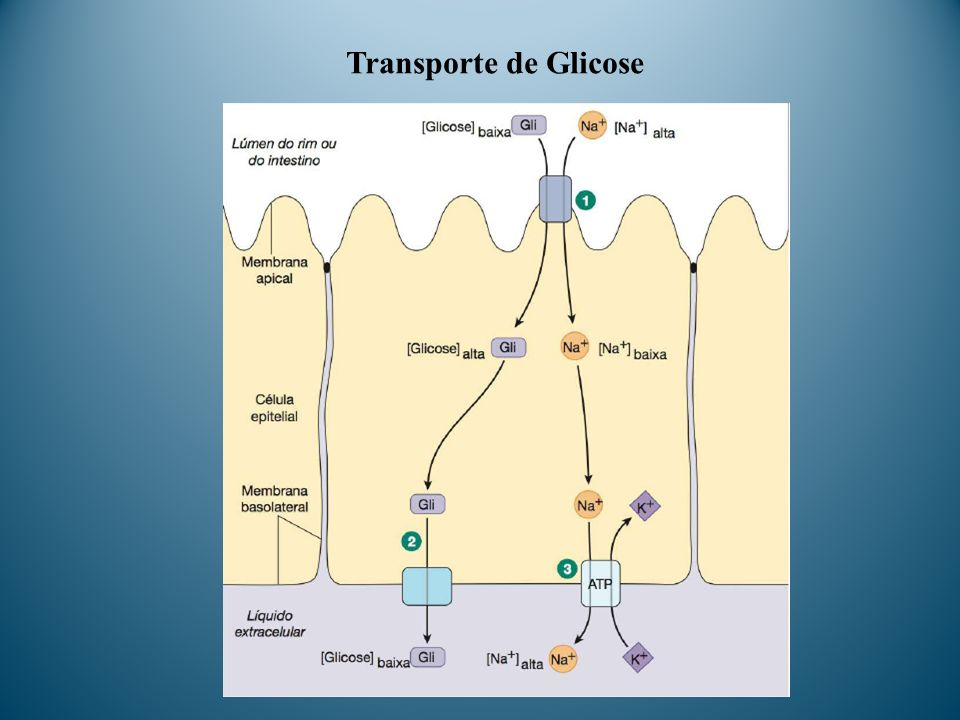 Transporte de Glicose