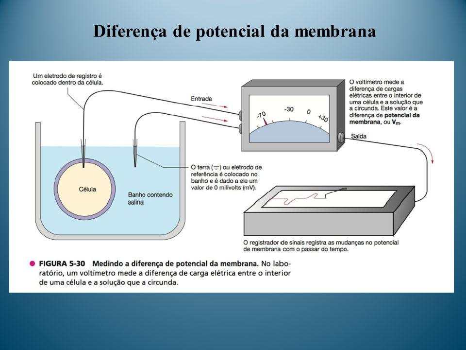 Diferença de potencial da membrana