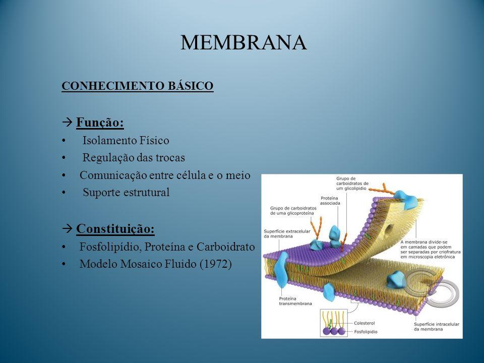 MEMBRANA CONHECIMENTO BÁSICO  Função: Isolamento Físico