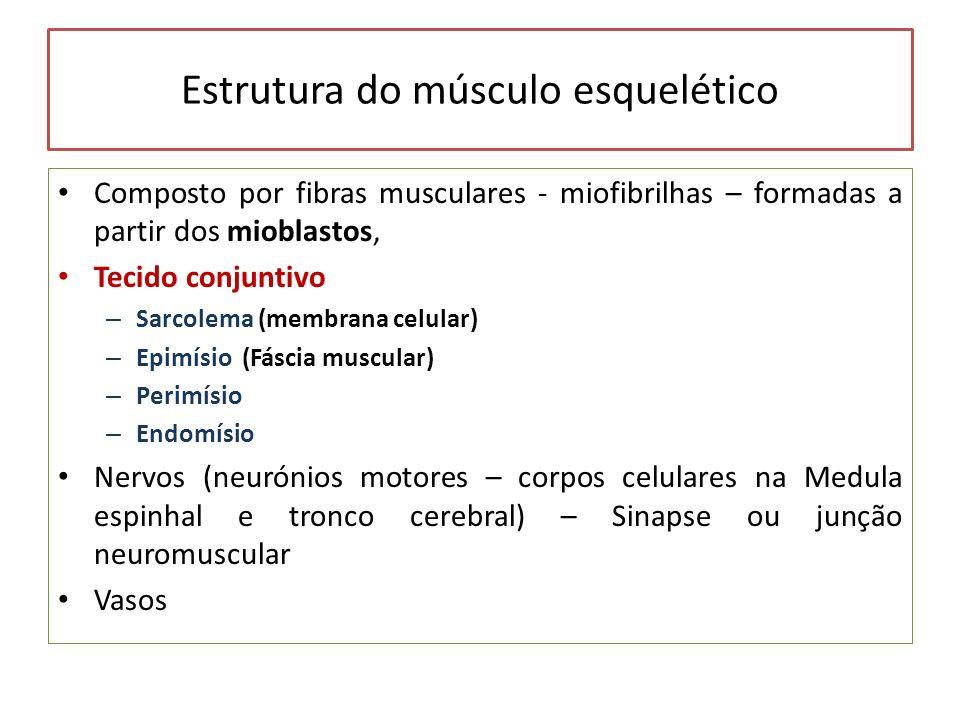 Estrutura do músculo esquelético