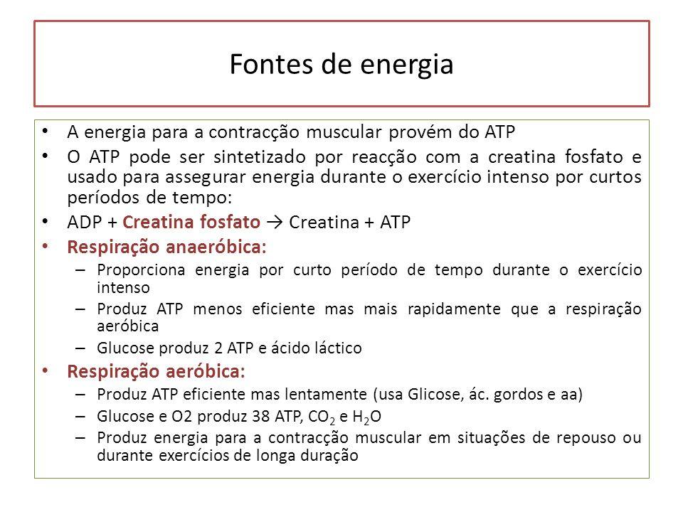Fontes de energia A energia para a contracção muscular provém do ATP
