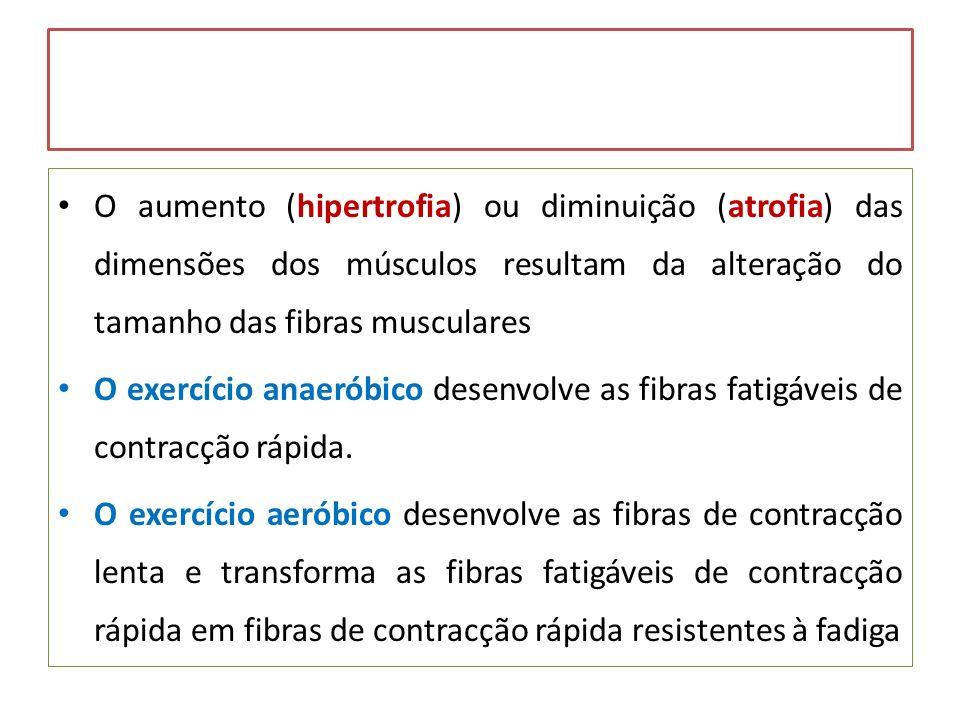 O aumento (hipertrofia) ou diminuição (atrofia) das dimensões dos músculos resultam da alteração do tamanho das fibras musculares