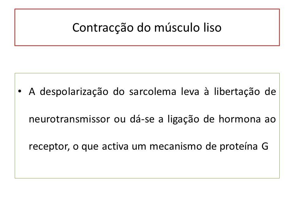Contracção do músculo liso