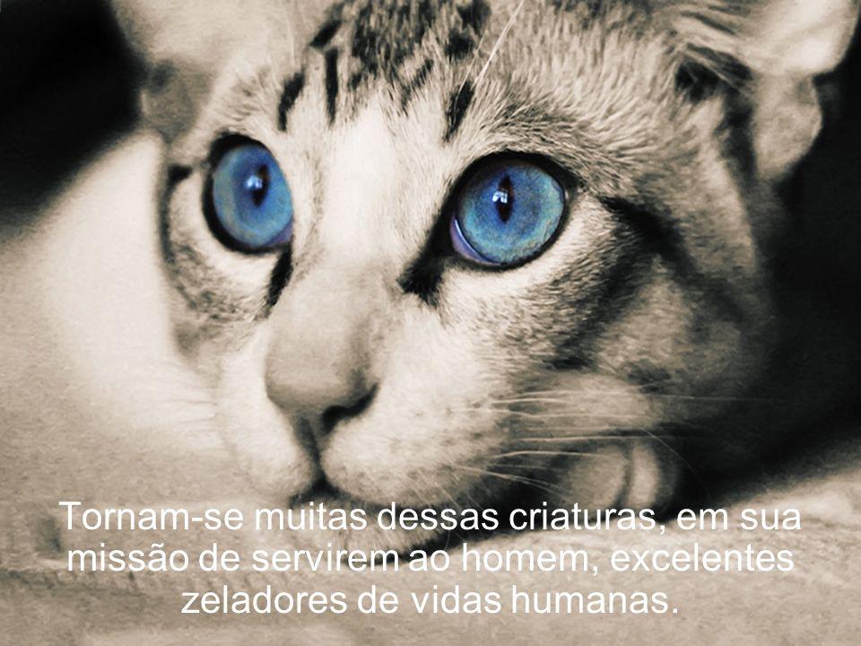 Tornam-se muitas dessas criaturas, em sua missão de servirem ao homem, excelentes zeladores de vidas humanas.