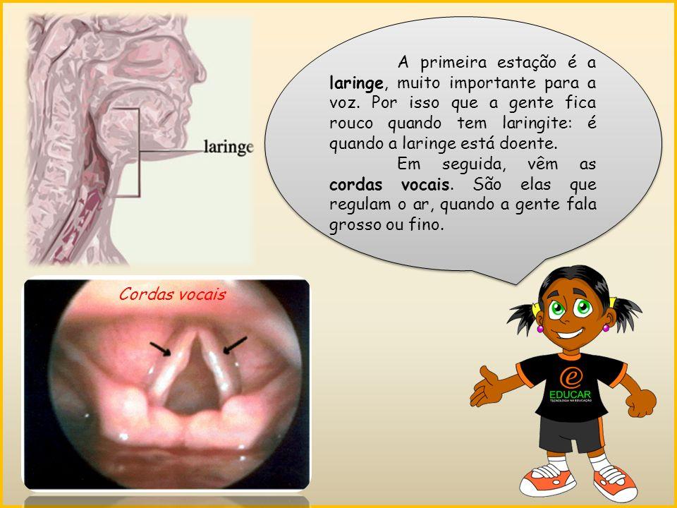 A primeira estação é a laringe, muito importante para a voz