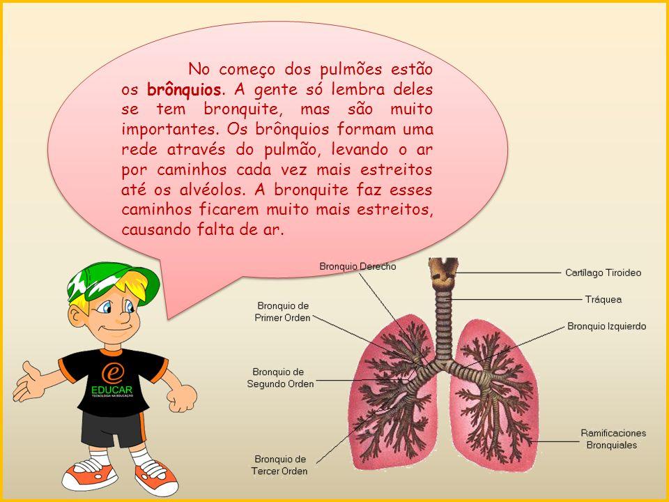 No começo dos pulmões estão os brônquios