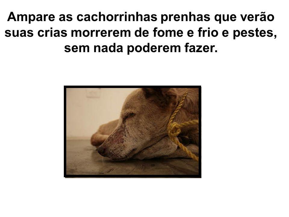 Ampare as cachorrinhas prenhas que verão suas crias morrerem de fome e frio e pestes, sem nada poderem fazer.