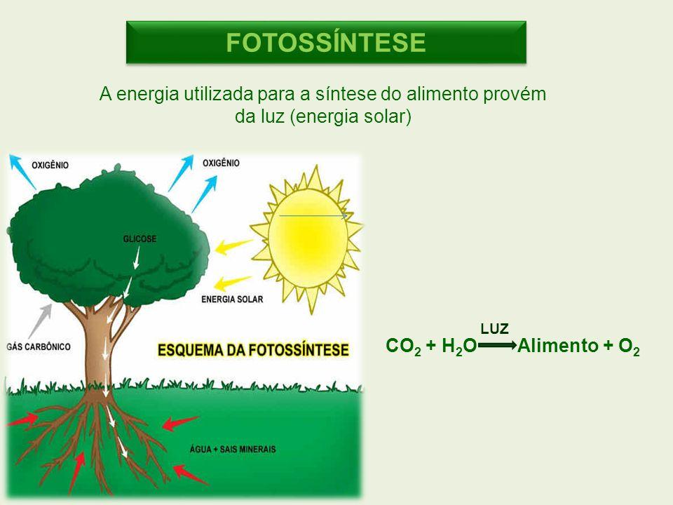 FOTOSSÍNTESE A energia utilizada para a síntese do alimento provém da luz (energia solar) LUZ.