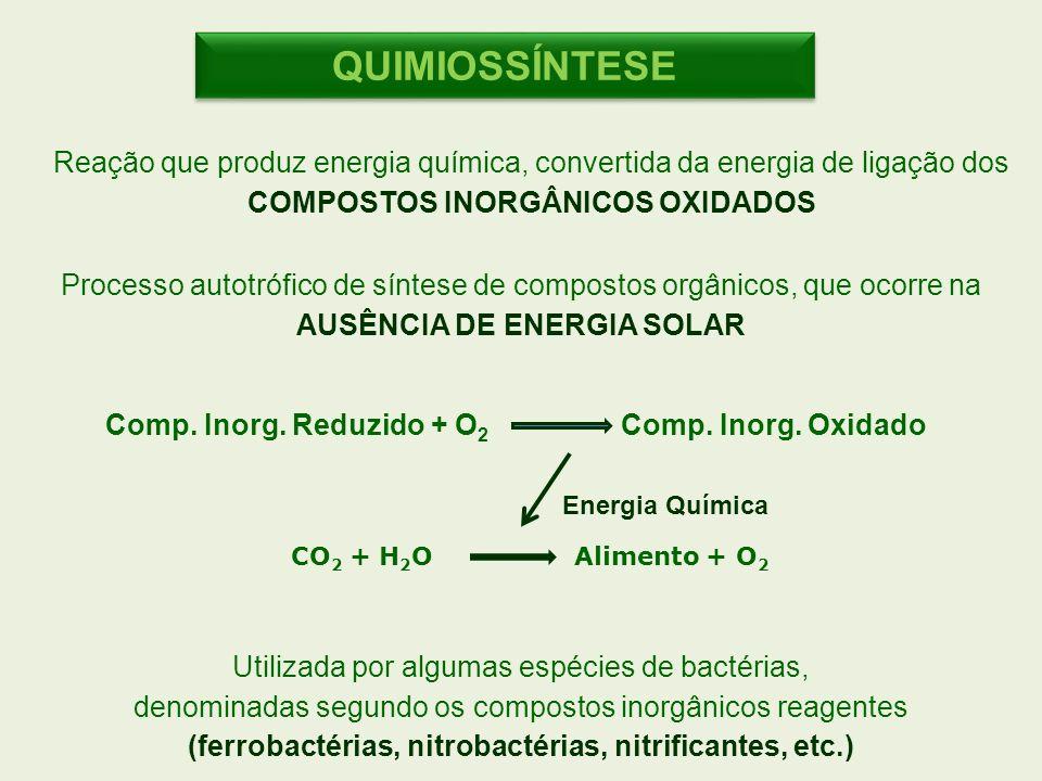 QUIMIOSSÍNTESE Reação que produz energia química, convertida da energia de ligação dos. COMPOSTOS INORGÂNICOS OXIDADOS.