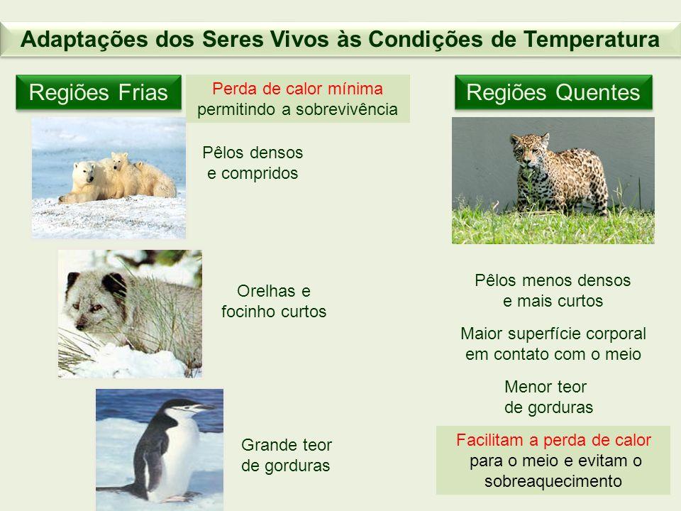 Adaptações dos Seres Vivos às Condições de Temperatura