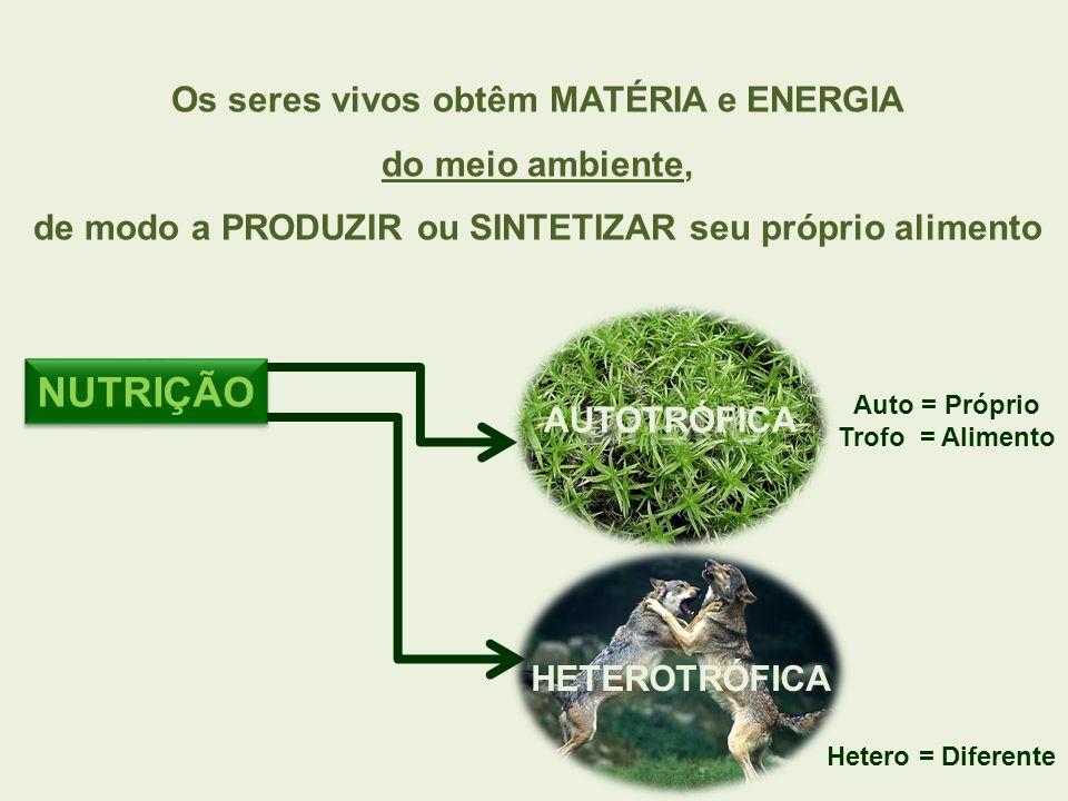 NUTRIÇÃO Os seres vivos obtêm MATÉRIA e ENERGIA do meio ambiente,