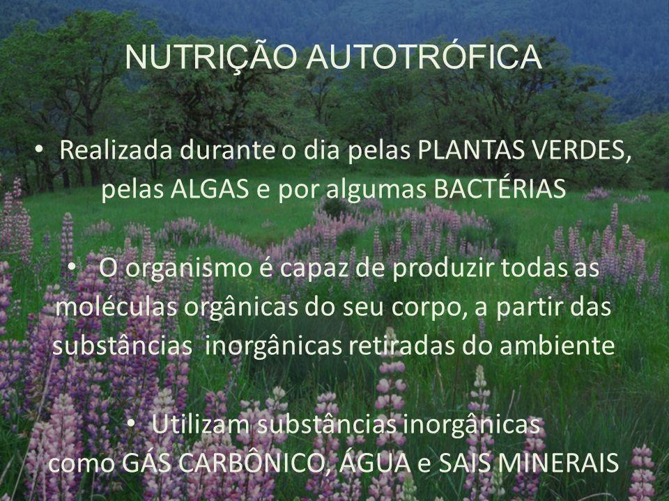 NUTRIÇÃO AUTOTRÓFICA Realizada durante o dia pelas PLANTAS VERDES,