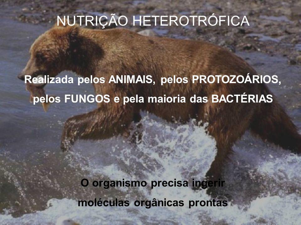 NUTRIÇÃO HETEROTRÓFICA