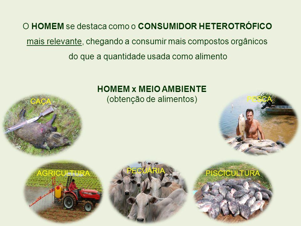 O HOMEM se destaca como o CONSUMIDOR HETEROTRÓFICO