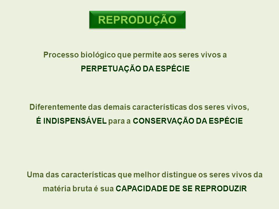 REPRODUÇÃO Processo biológico que permite aos seres vivos a PERPETUAÇÃO DA ESPÉCIE. Diferentemente das demais características dos seres vivos,