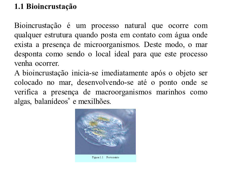 1.1 Bioincrustação