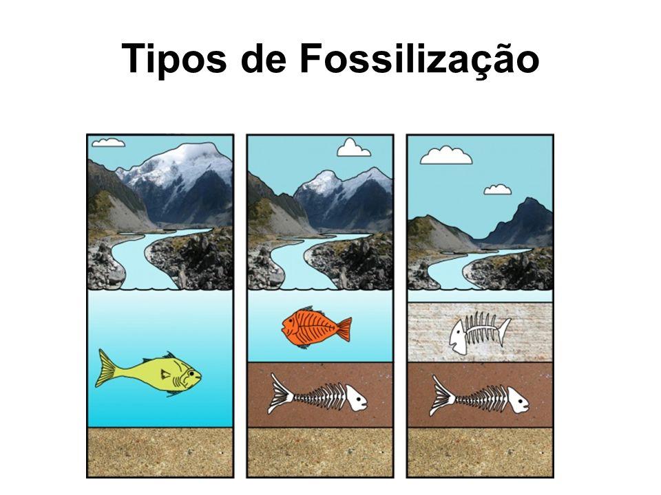 Tipos de Fossilização