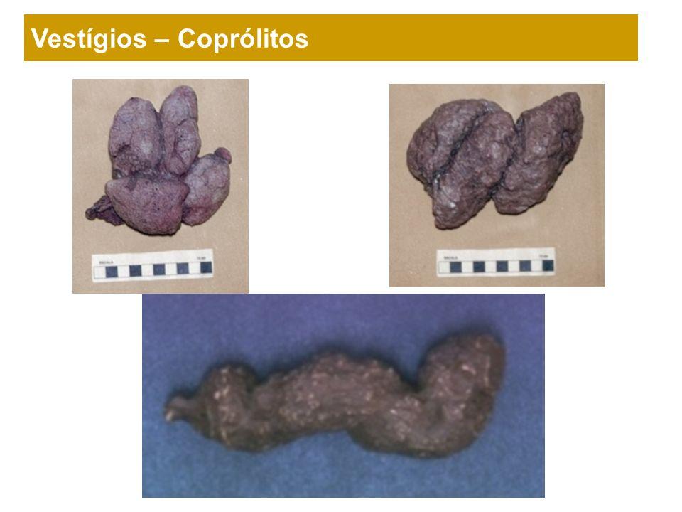 Vestígios – Coprólitos