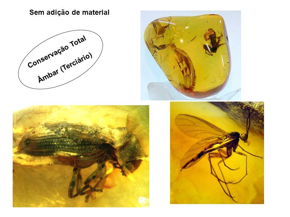 Sem adição de material Conservação Total Âmbar (Terciário)
