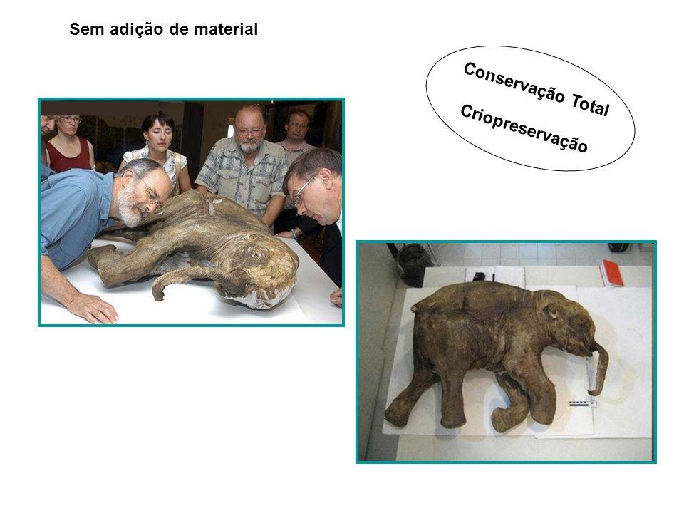 Sem adição de material Conservação Total Criopreservação