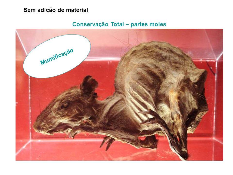 Conservação Total – partes moles