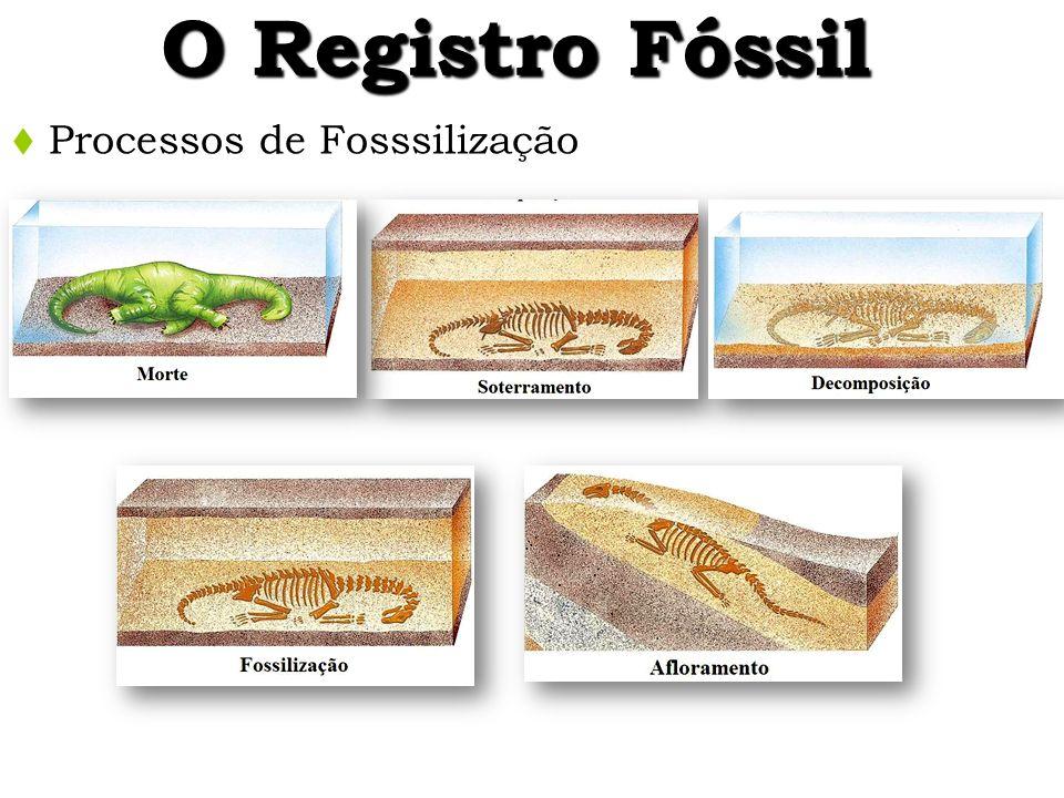 O Registro Fóssil Processos de Fosssilização 25