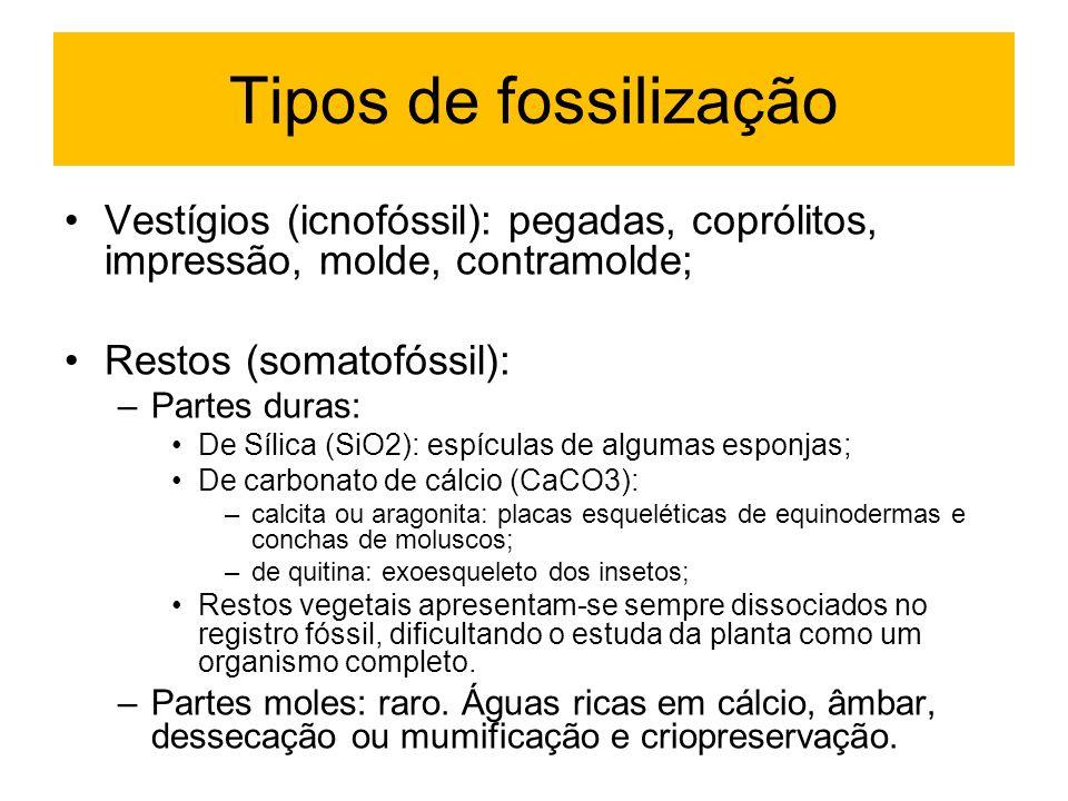 Tipos de fossilização Vestígios (icnofóssil): pegadas, coprólitos, impressão, molde, contramolde; Restos (somatofóssil):