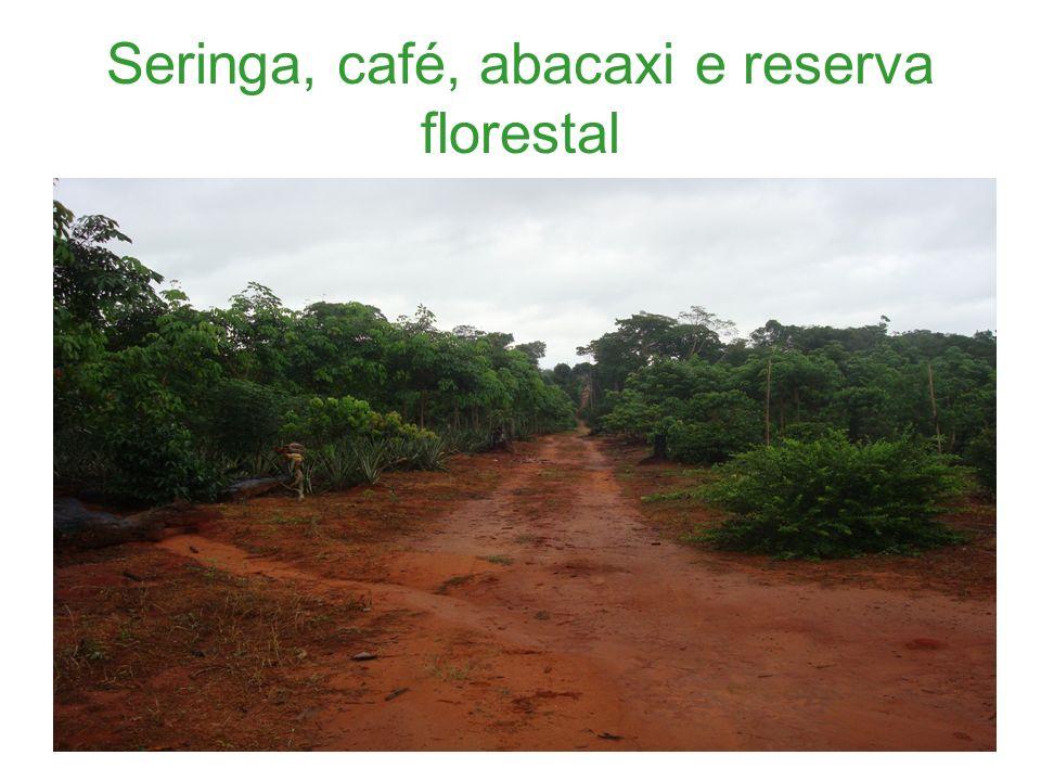 Seringa, café, abacaxi e reserva florestal