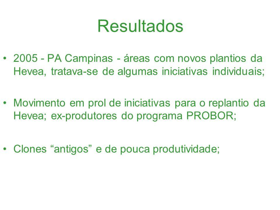 Resultados 2005 - PA Campinas - áreas com novos plantios da Hevea, tratava-se de algumas iniciativas individuais;