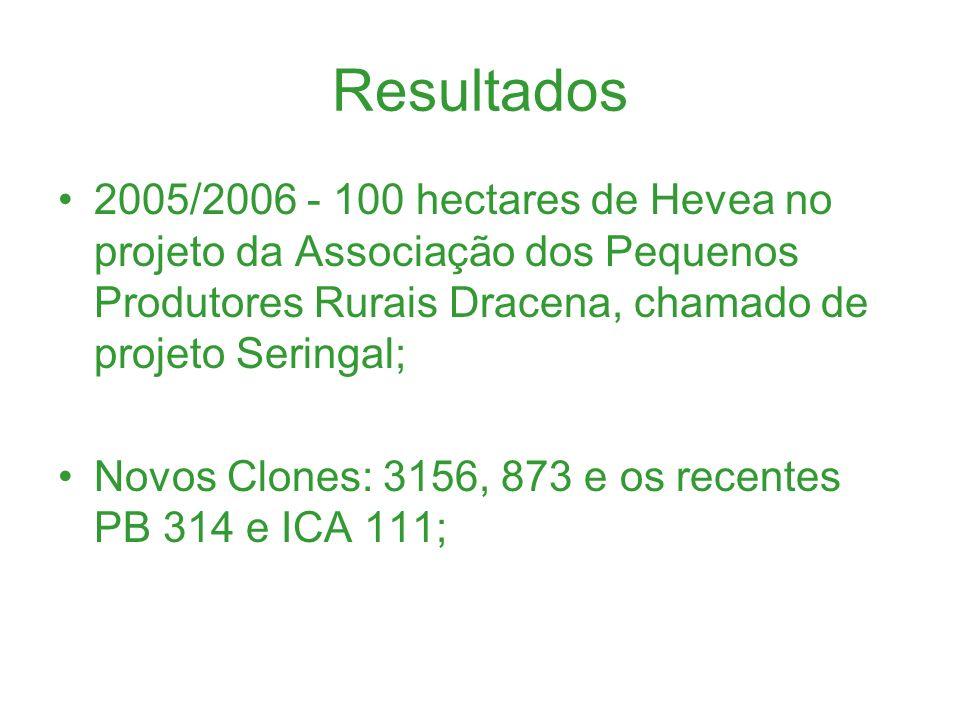 Resultados 2005/2006 - 100 hectares de Hevea no projeto da Associação dos Pequenos Produtores Rurais Dracena, chamado de projeto Seringal;