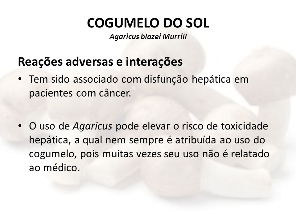 COGUMELO DO SOL Agaricus blazei Murrill