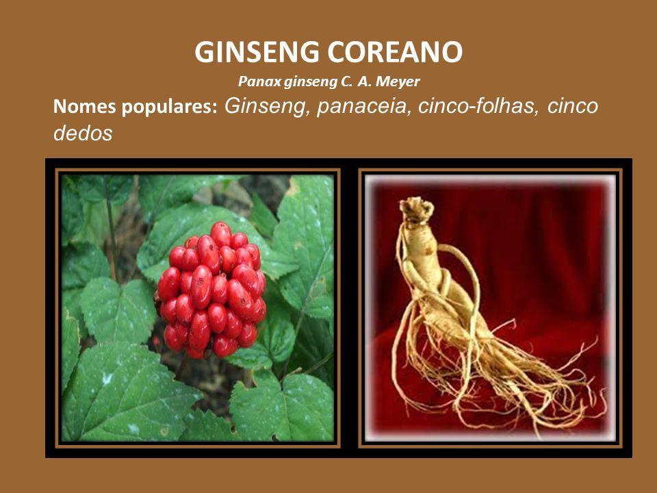 GINSENG COREANO Panax ginseng C. A. Meyer