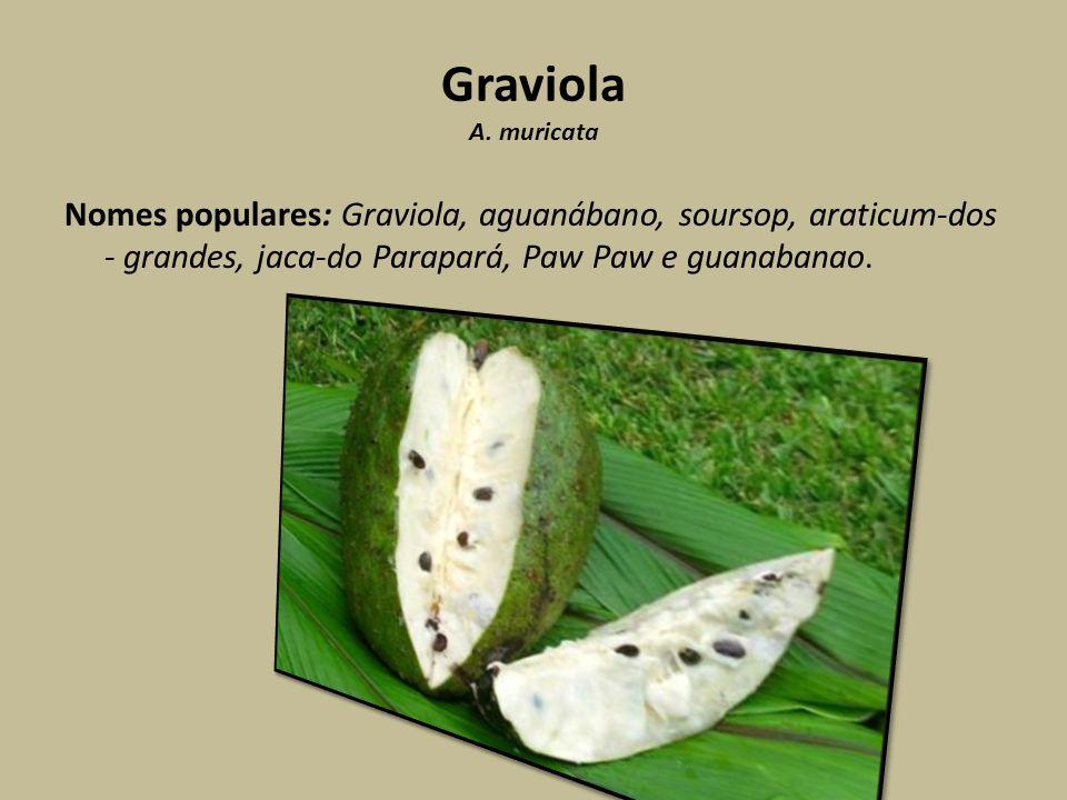 Graviola A.