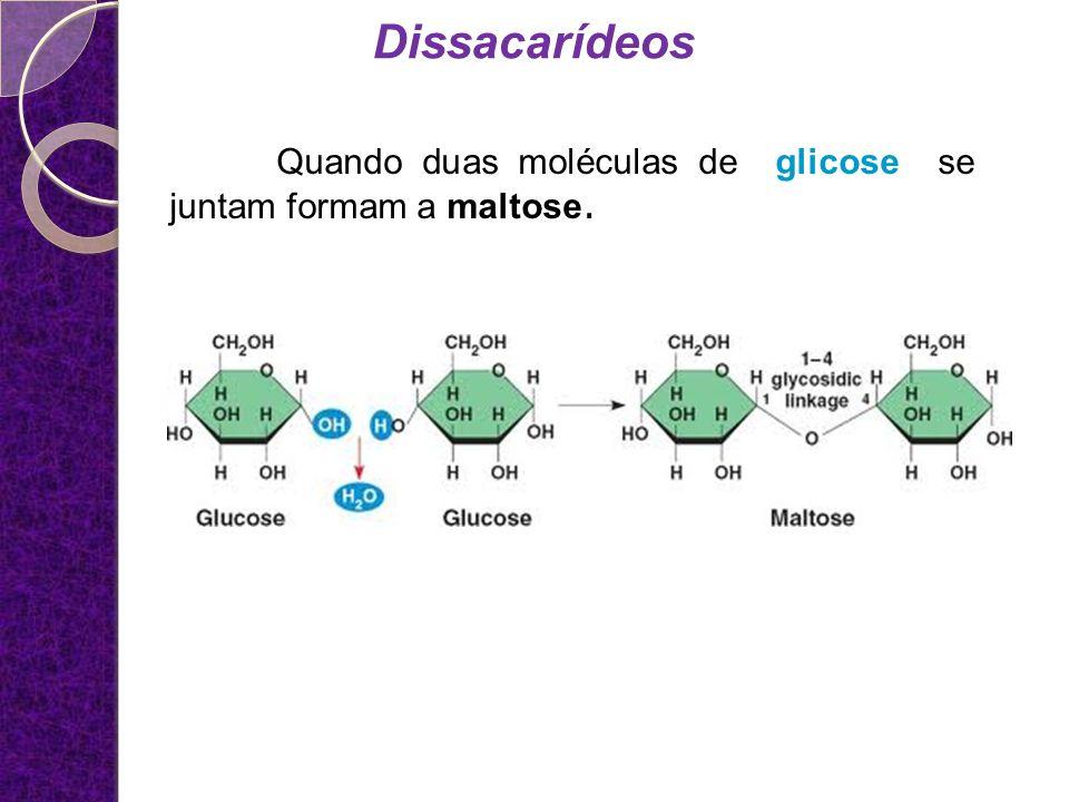 Dissacarídeos Quando duas moléculas de glicose se juntam formam a maltose.