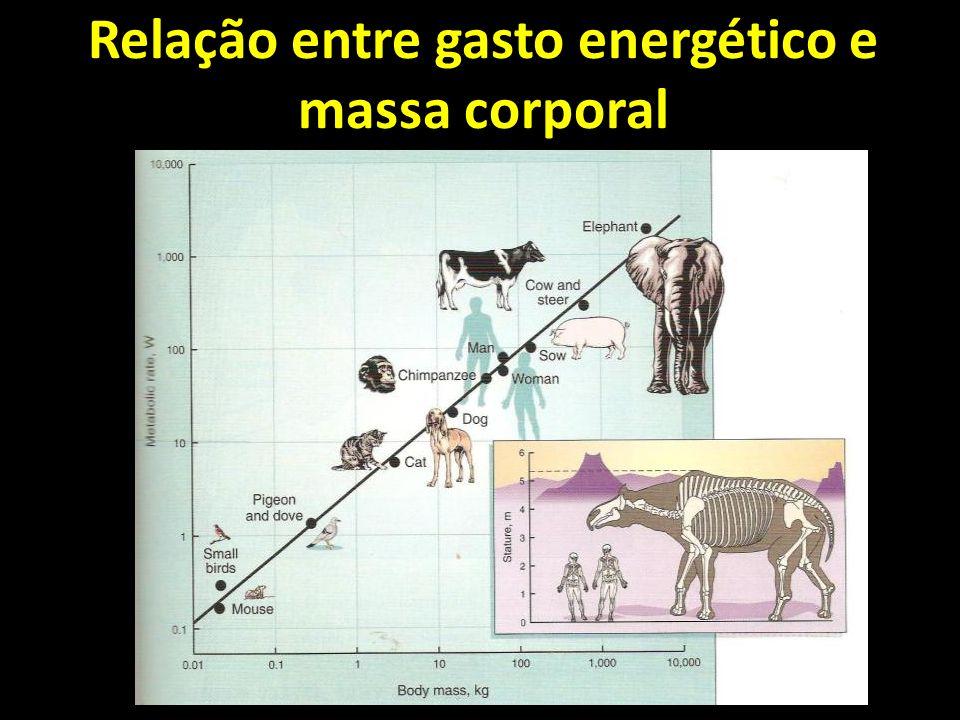 Relação entre gasto energético e massa corporal