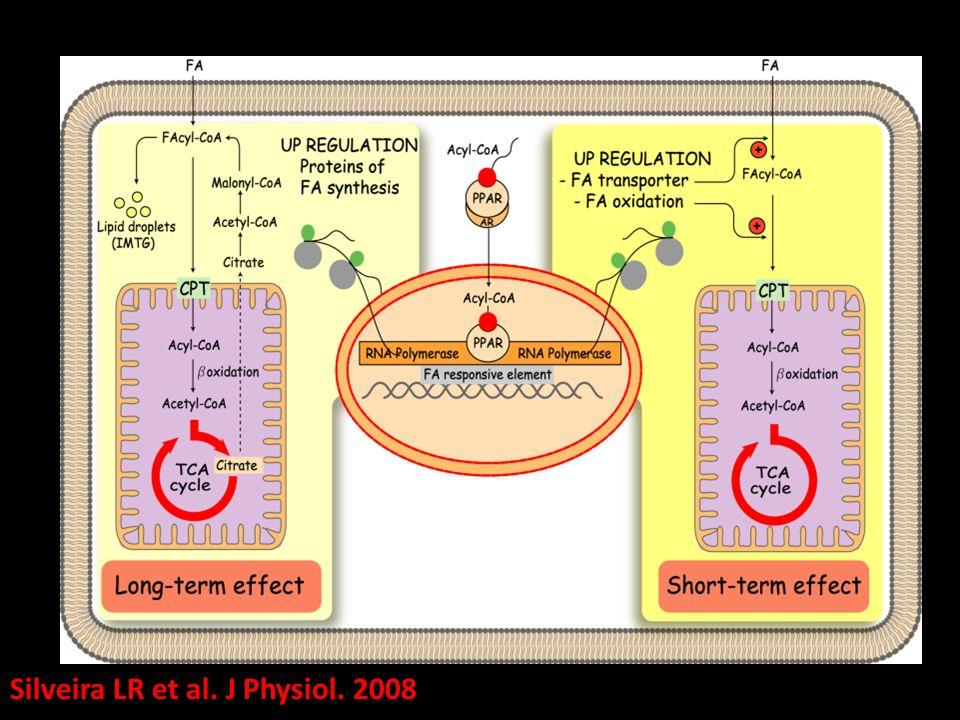 Silveira LR et al. J Physiol. 2008