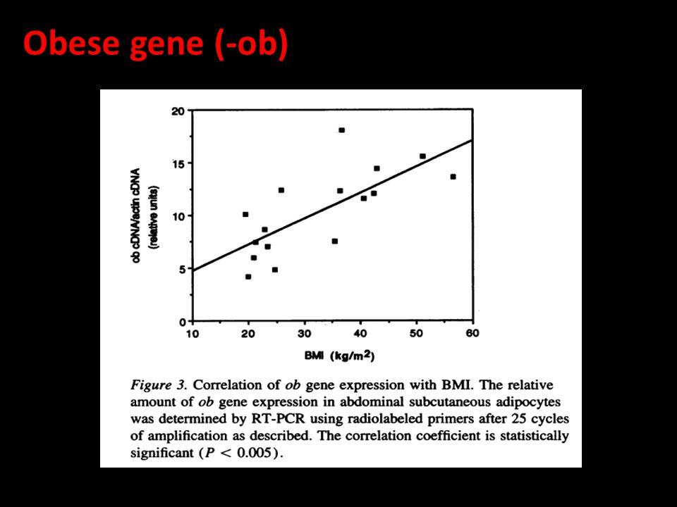 Obese gene (-ob)