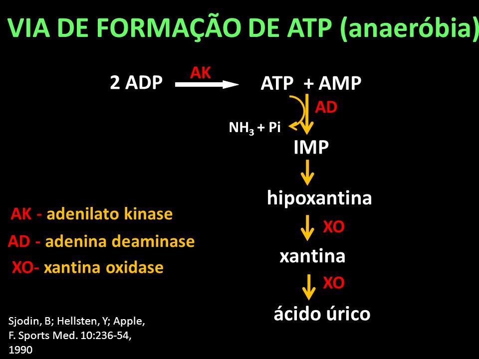 VIA DE FORMAÇÃO DE ATP (anaeróbia)