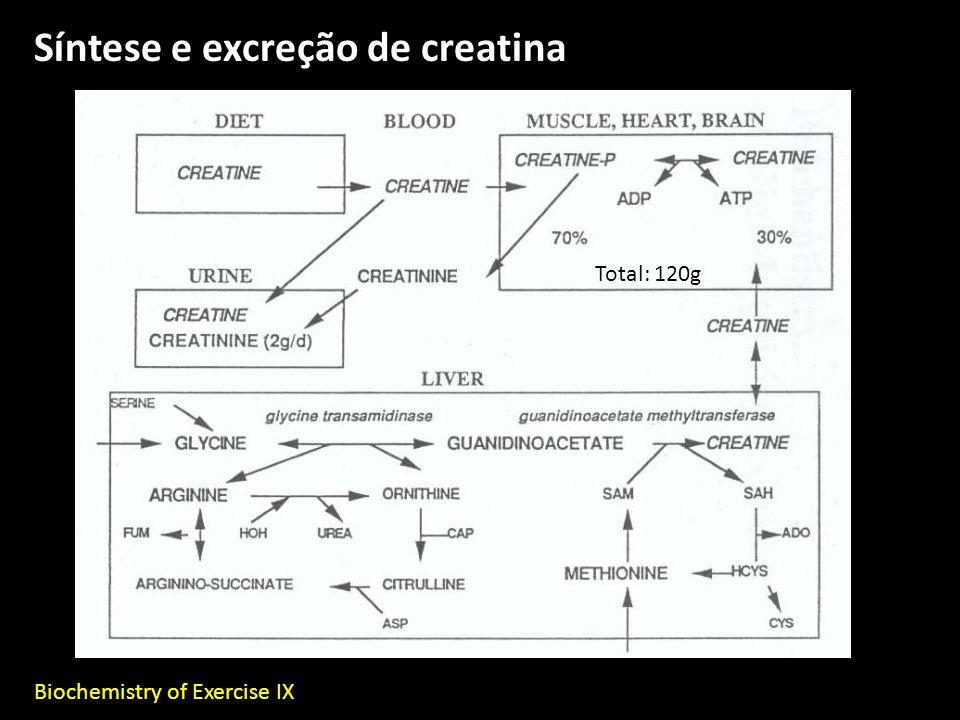 Síntese e excreção de creatina
