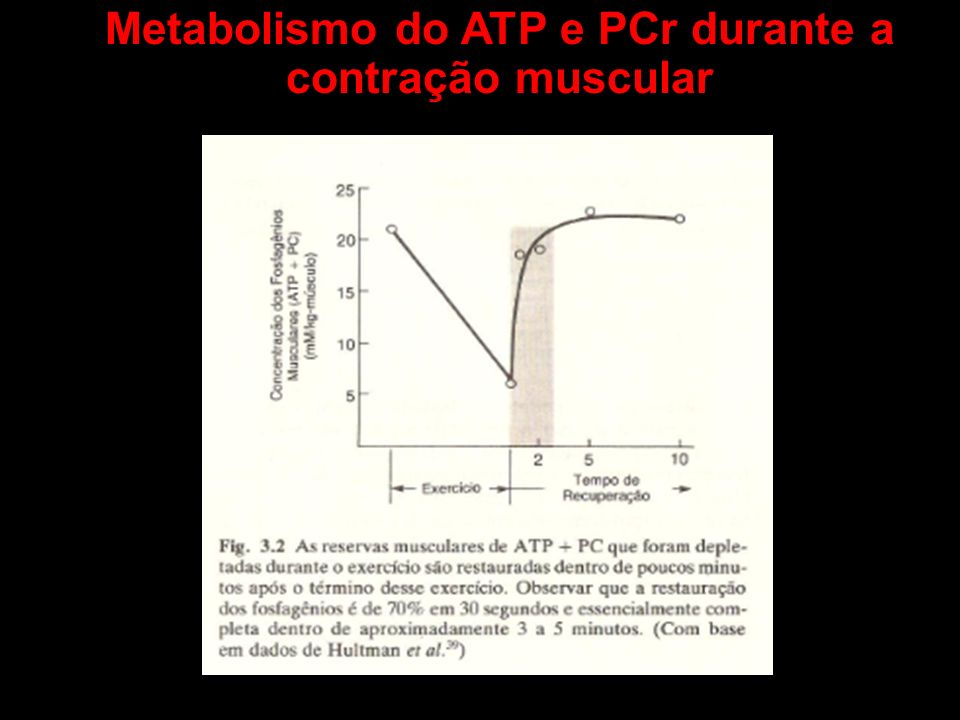 Metabolismo do ATP e PCr durante a contração muscular